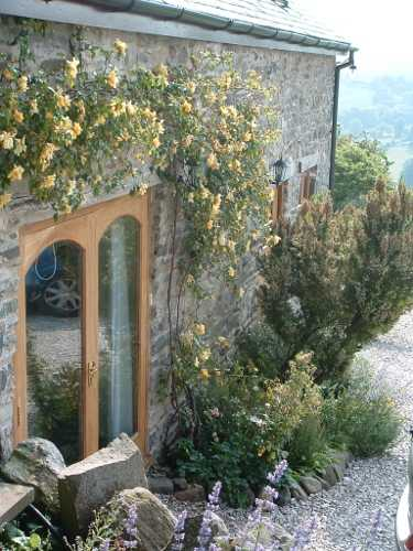 roses round cottage door